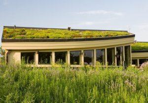 groen dak